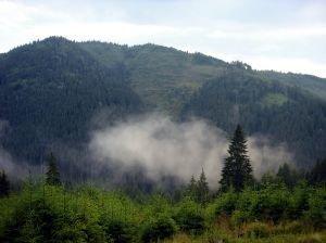 las za mgłą