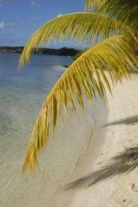 palma nad oceanem